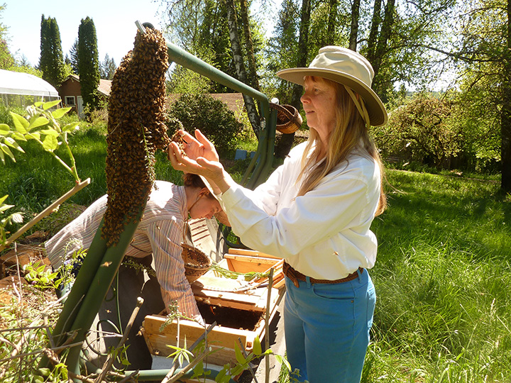 Moving a Bee Swarm By Hand