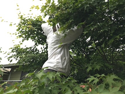 Saving a Hive After Tree Cut Down