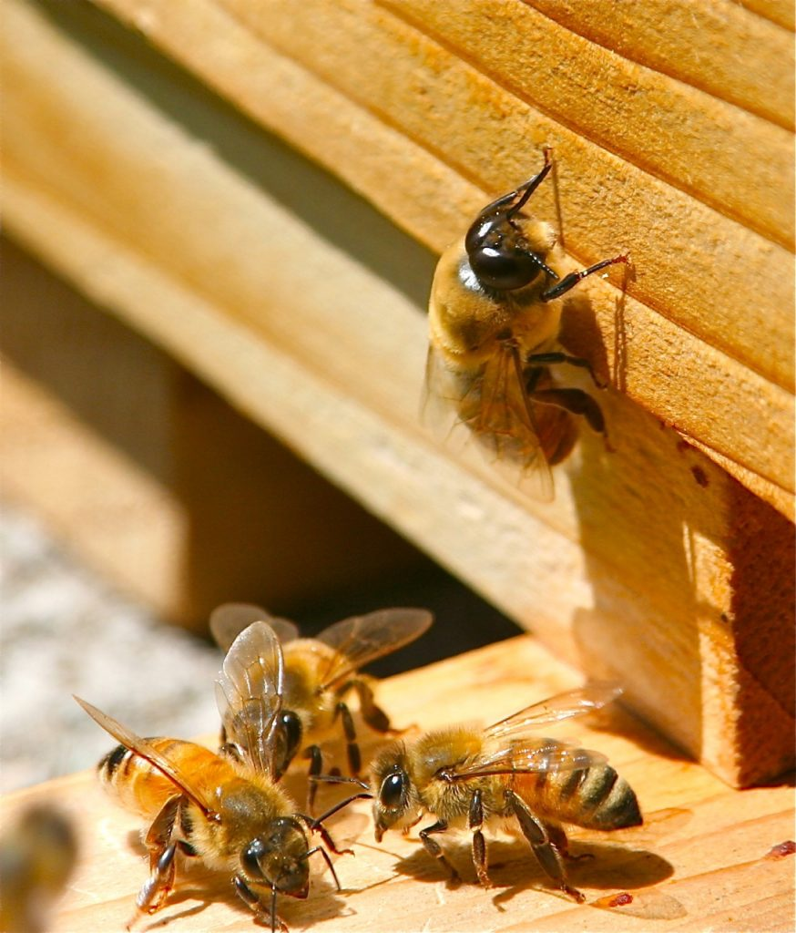 11 Movies About Bees On Our Farm
